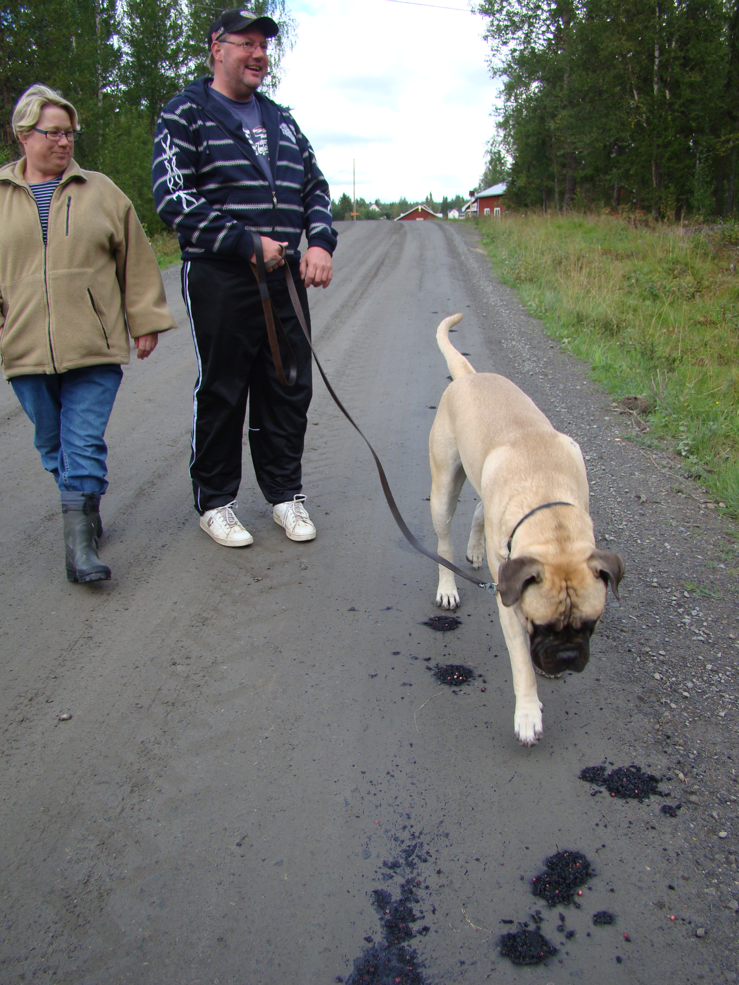 Arkivbild: Björnspillning inne i byn.